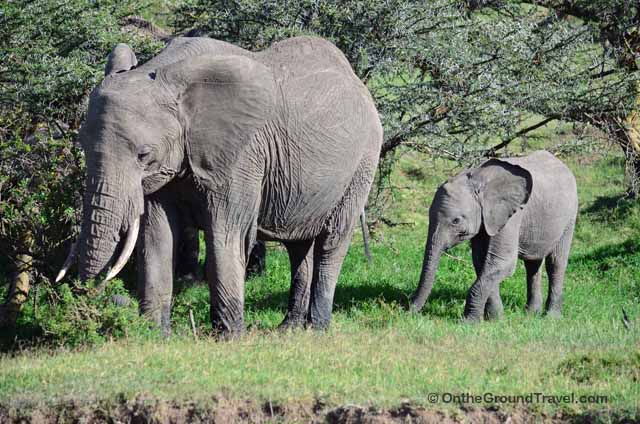 African Safari Elephant in Kenya