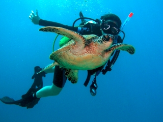 Hawaii Diver with Sea Turtle
