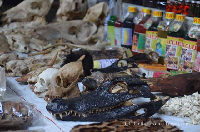 Animals\' skulls in the Belen Market in Iquitos