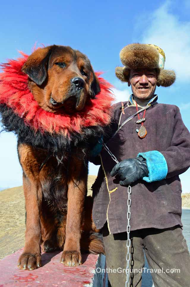 Tibet Travel - Tibetan Dog and Tibetan Man - Trip to Tibet